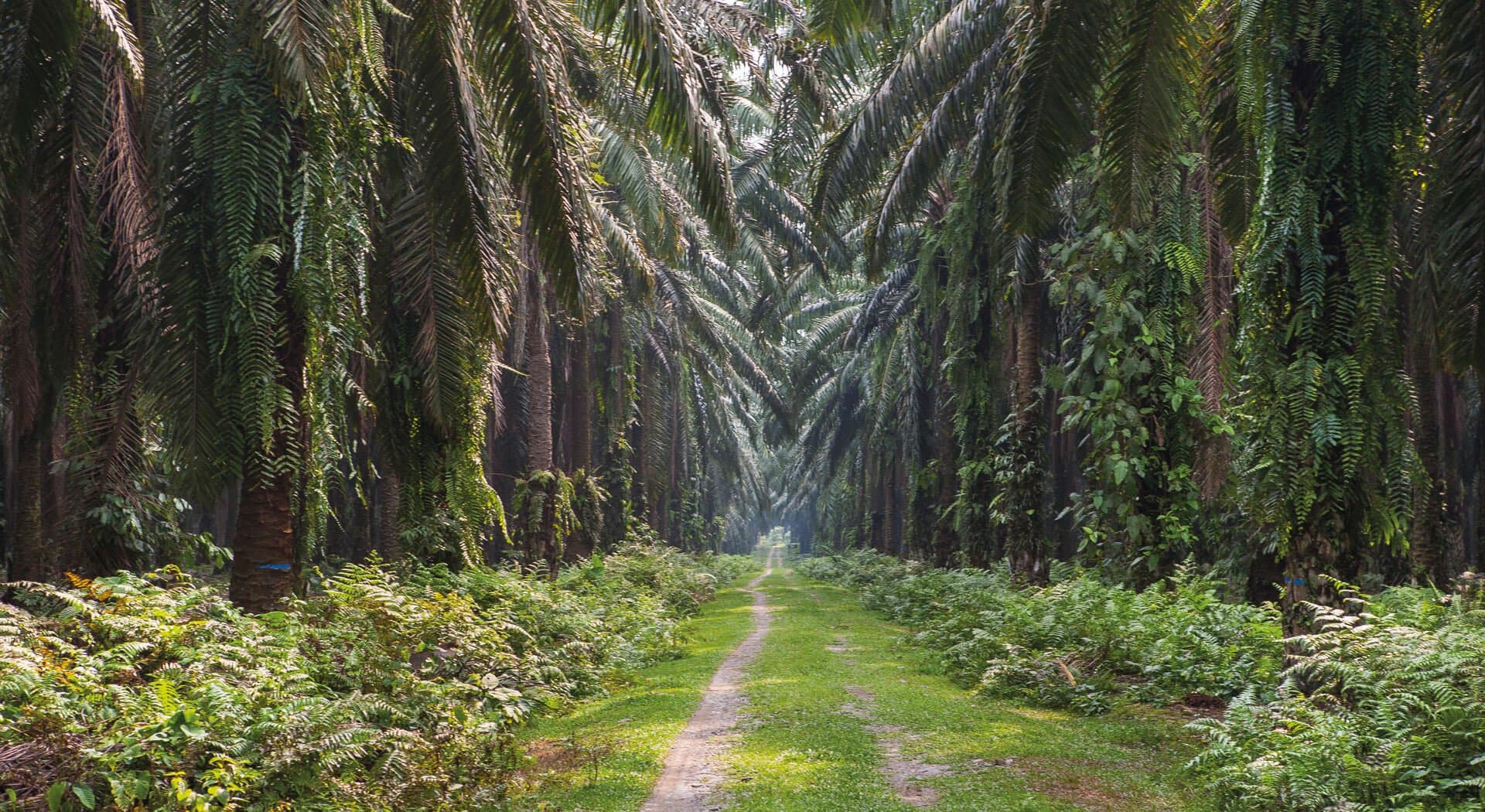 Worlds-biggest-palm-oil-planter-is-running-out-of-space-at-home
