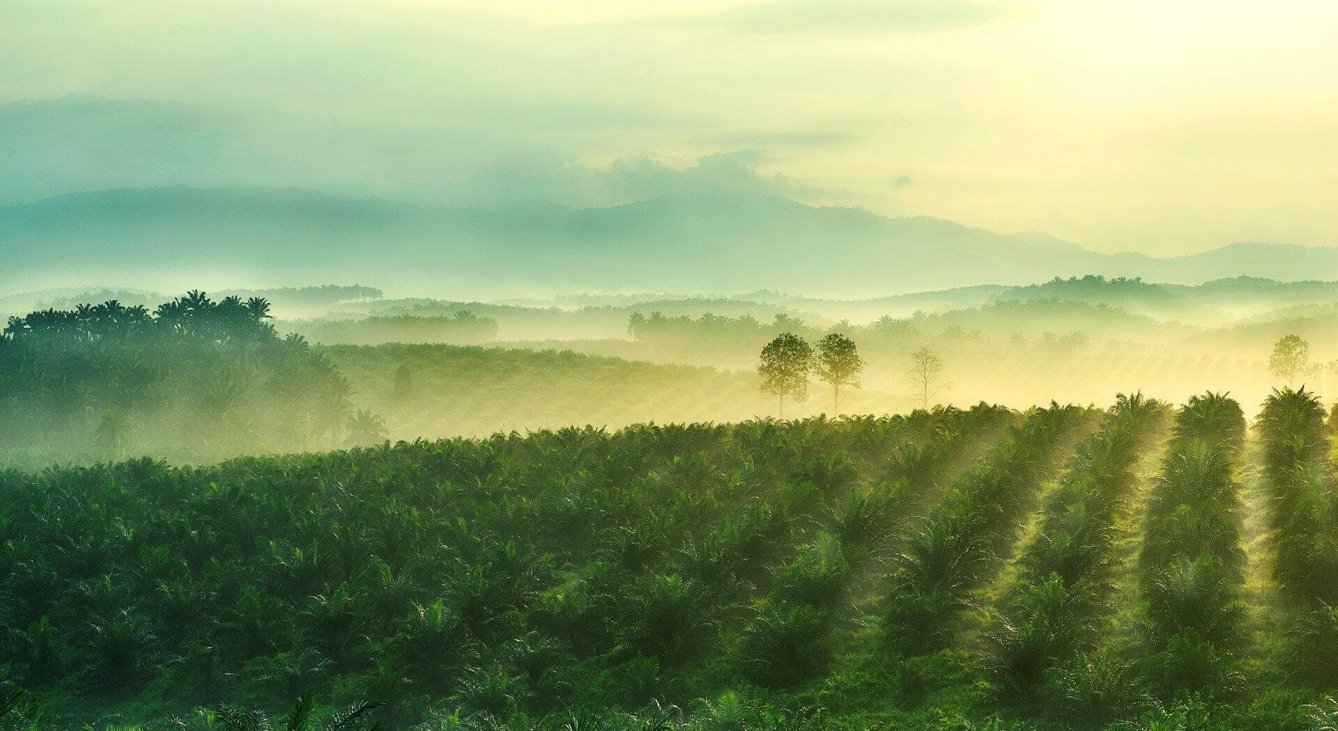 Sime darby plantation strengthens policy on suppliers who violate no deforestation commitments